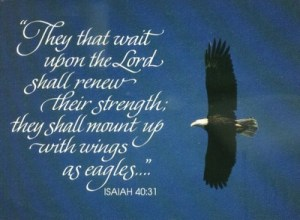 isaiah 40_31 eagle