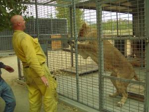 Kevin & lion